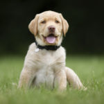 Why You Should Enroll in Puppy Training Classes