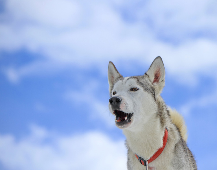 how to get your dog to stop barking dog training nation