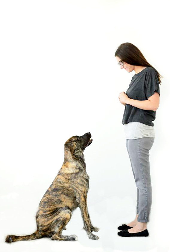 How To Train Your Dog Not To Jump Part 2 Dog Training Nation