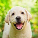 Top 10 Puppy Training Tips