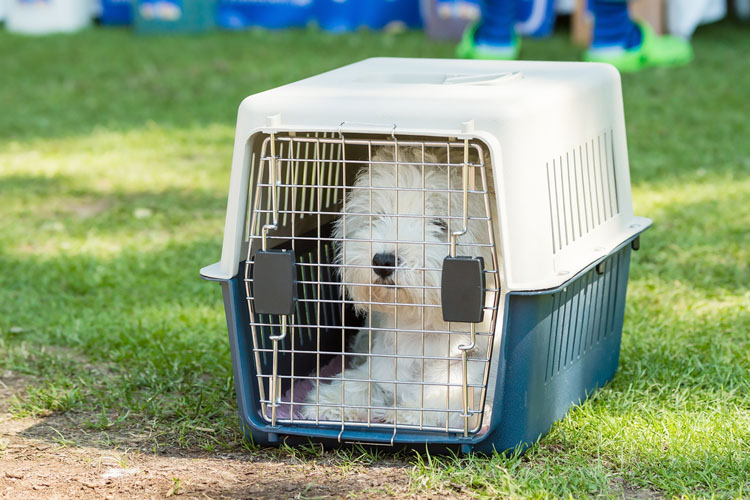 Crate Training Your Dog Pros And Cons