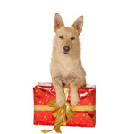 Dog Lovers Gift Ideas 2014- Splurge Worthy Ideas