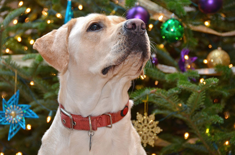 How to Puppy-Proof Your Christmas Tree | Dog Training Nation