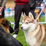 Dog Socialization Tips