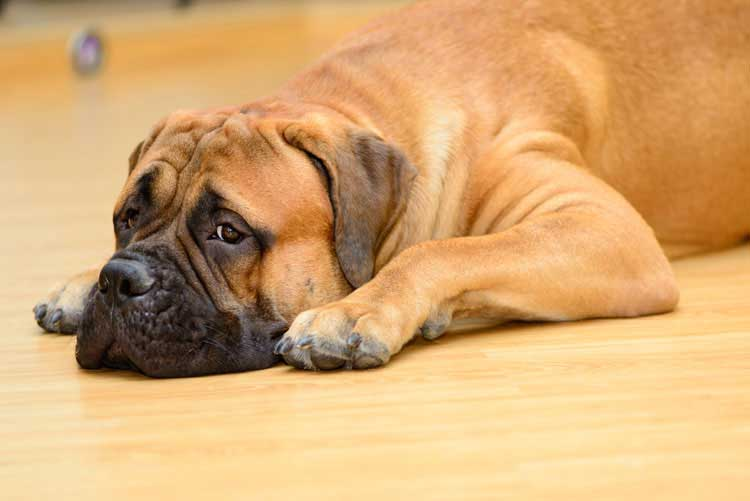 What To Give Your Dog For Upset Stomach And Diarrhea