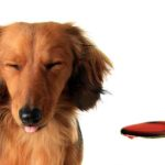 How To Give Your Dog Medicine (Powder Or Liquid)