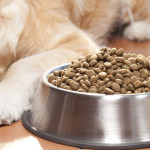 What to Feed Picky Dogs