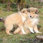 Humping Dogs: It's Not What You Think!