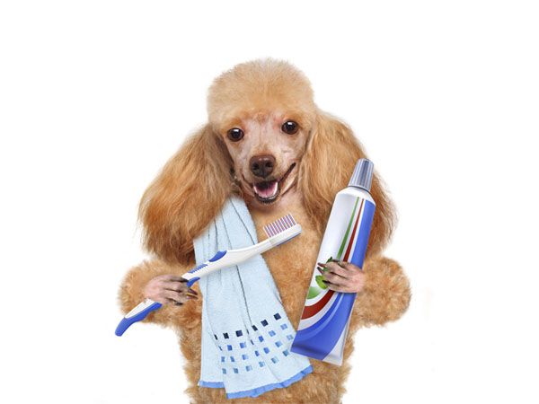 Best Dog Dental Care Products