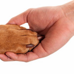 Trimming Dog Nails: Restraining Your Dog's Paw (2 of 3)