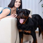 4 Tips for Renting with Large Dogs