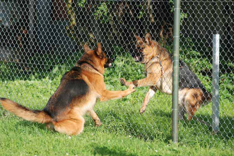 fence fighting dogs how to stop the madness