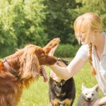 Choosing the Best Doggy Day Care