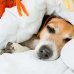 Best Burrowing Bed for Dogs
