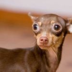 Why Your Dog Is Shaking Or Shivering When Not Cold