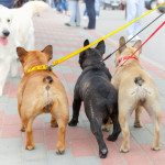 Walking Two Dogs at Once Tips