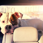 4 Tips for Traveling With Dogs