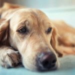 Leaving Your Dog Home Alone Tips
