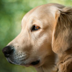 Best Probiotic for Dogs