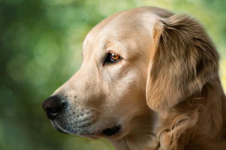 Can Dogs Take Probiotic