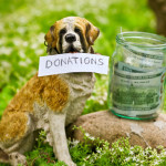 Do Donations to Stray Dogs Actually Help?
