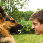 What to Do When Your Dog Bites