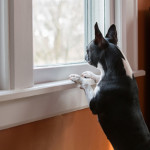 How to Stop Your Dog From Barking Out Windows