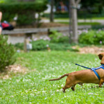 Stop Using Retractable Dog Leashes in Public Places