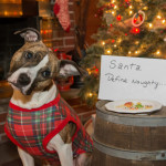 5 Fun Stocking Stuffers For Your Dog