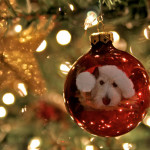 5 Thoughtful Christmas Gifts For Dog Lovers