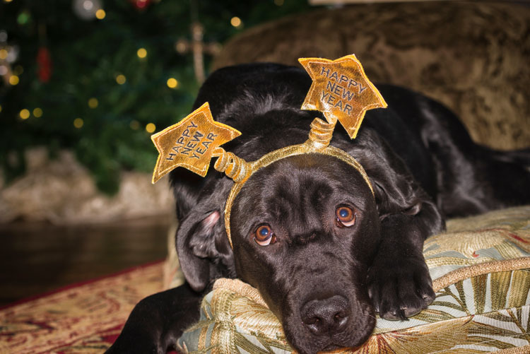 New Year's Eve Dog Safety Tips