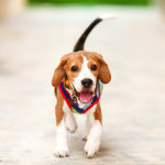 When Dogs Wag Their Tails, Are They Happy?