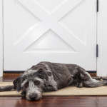 Leaving Your Dog Home Alone? Try These Tips