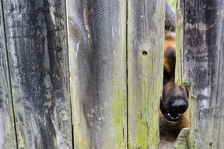 dog fence fighting solutions