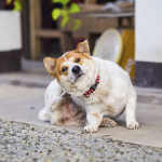 Dog Food Allergies: Give This Test A Try