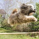Building an At-Home Dog Agility Course