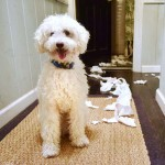 Dog Shredding Paper Tips That Will Save Your Paper