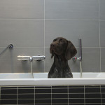 Dogs Can Benefit From Mud Baths As Well
