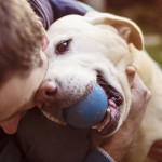 7 Tips On Being A Responsible Dog Owner
