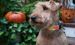 3 Halloween Pet Safety Tips You Need to Read