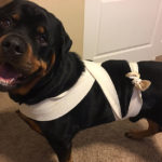 How To Create An Anxiety Wrap For Dogs At Home