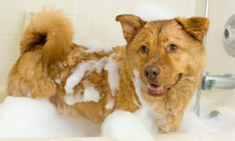Dog Conditioners for Short, Medium & Long-Haired Dogs