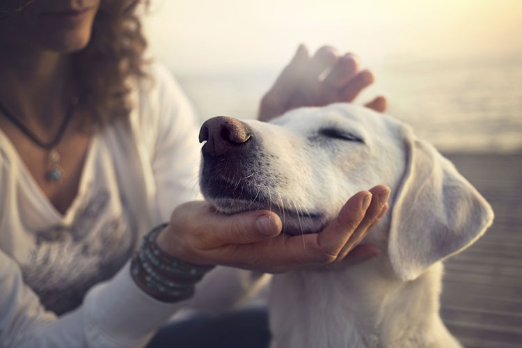 calming a hyperactive dog through massage | dog training nation