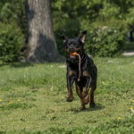 How to Help a Dog With Arthritis Naturally