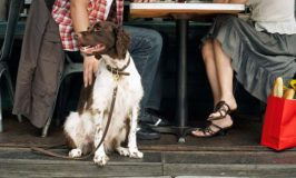 6 Tips For Dining In Dog-Friendly Restaurants