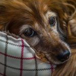 5 Tips For Sharing A Home With An Incontinent Dog