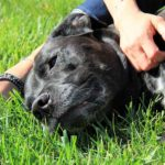 Dog Massage Tips For Anxious Dogs
