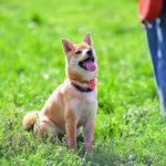 Easy Impulse Control Exercises To Teach Dogs Self-Control