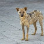 How To Protect Yourself From Stray Dogs While Walking