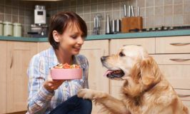 Teaching Dogs Polite Manners Around Treats